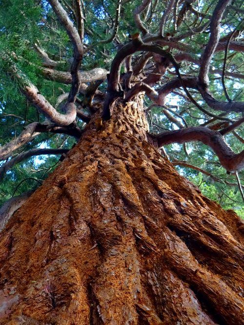 Über Holz und Hölzer